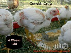 4 Weeks Old Broilers For Sale | Livestock & Poultry for sale in Rivers State, Port-Harcourt