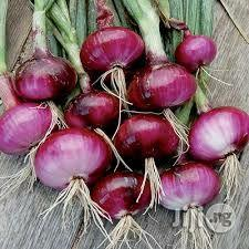 Onions Farming Manual | Meals & Drinks for sale in Abuja (FCT) State, Kuje