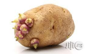 Potato Farming Manual | Meals & Drinks for sale in Kuje, Abuja (FCT) State, Nigeria