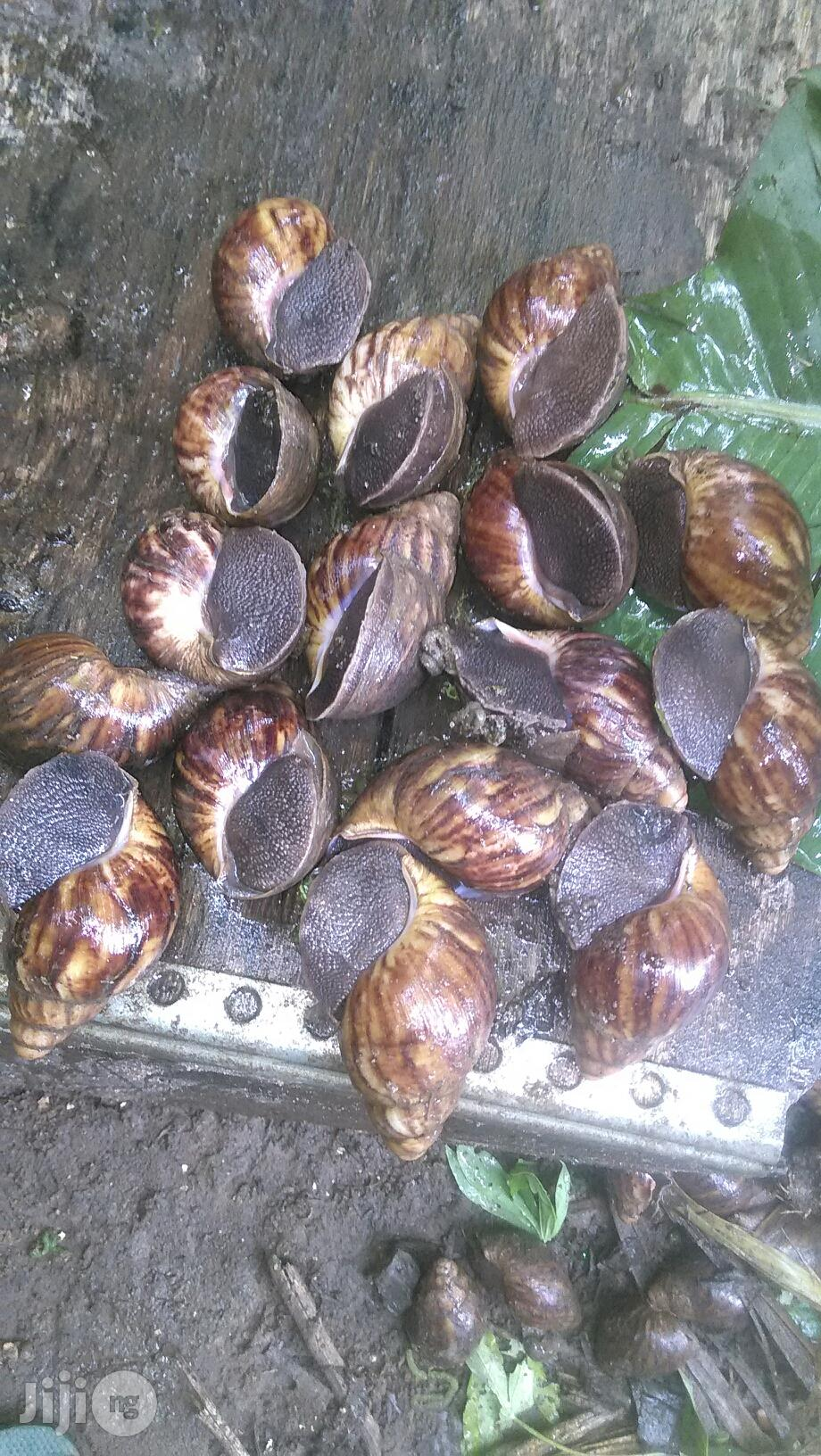Snail Meat Still The Best