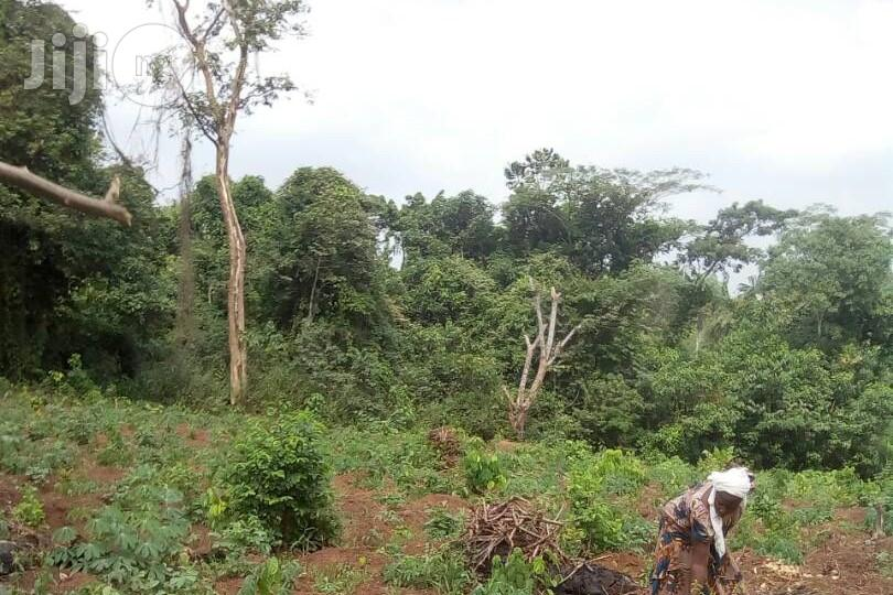 Agric Farm Land For Sale | Land & Plots For Sale for sale in Obafemi-Owode, Ogun State, Nigeria