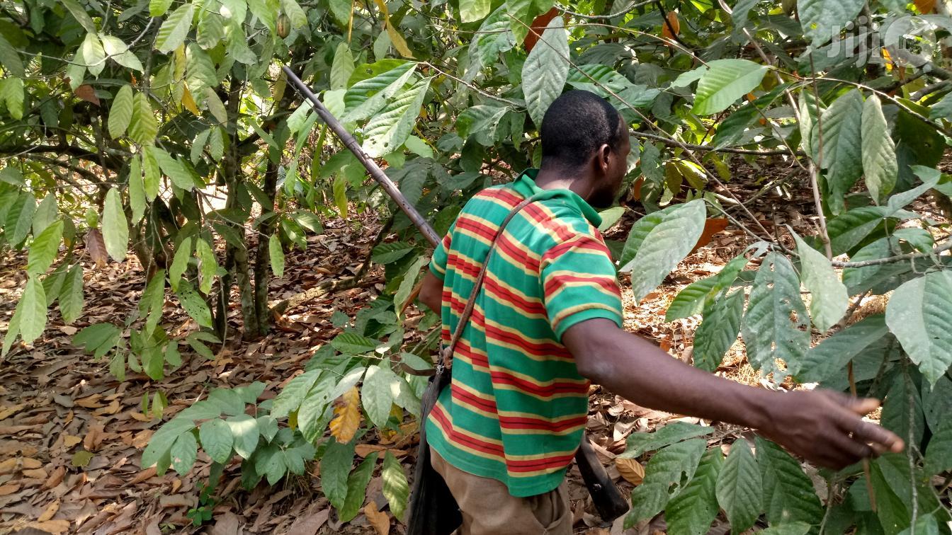 Farm Land For Sale | Land & Plots For Sale for sale in Odeda, Ogun State, Nigeria