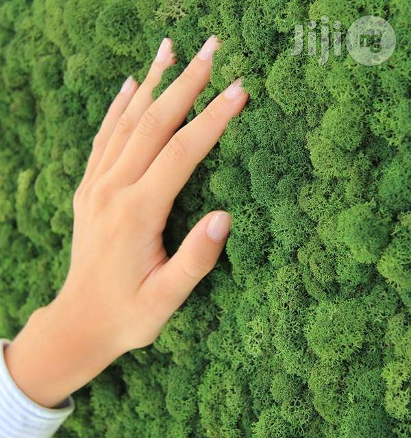 Archive: Quality Wall Grass For Homes, Hospitals, Schools Etc Wall Designs
