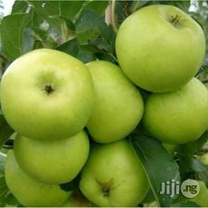 Green Apple Seedlings | Feeds, Supplements & Seeds for sale in Plateau State, Jos