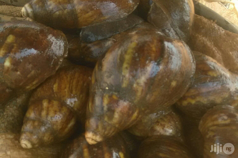 Snails For Sale