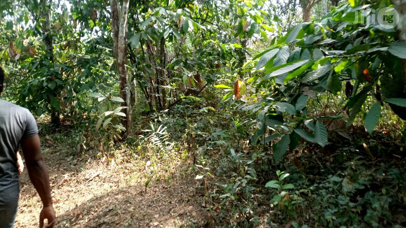 Farm Land In Ogun State