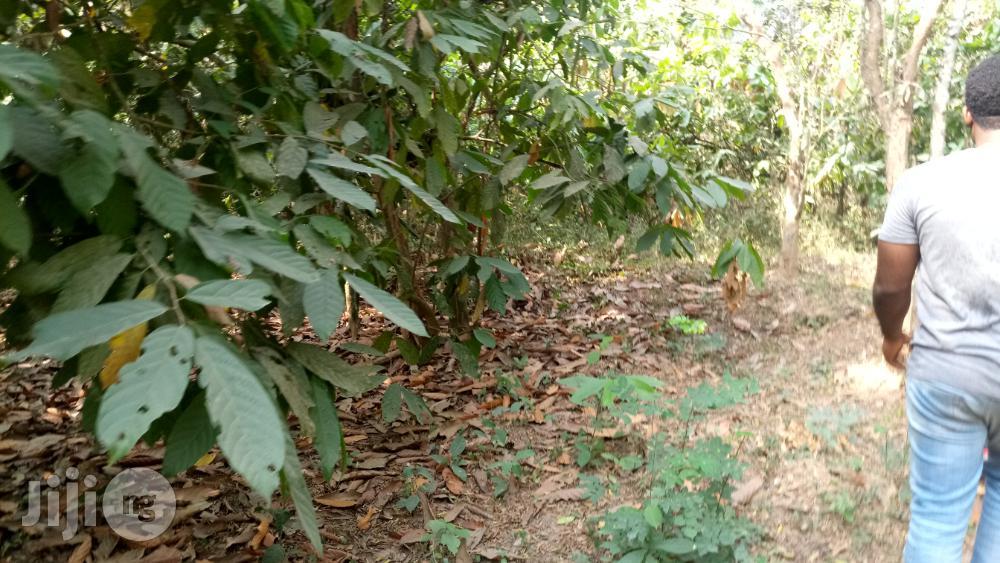 Farm Land For Sale   Land & Plots For Sale for sale in Odeda, Ogun State, Nigeria