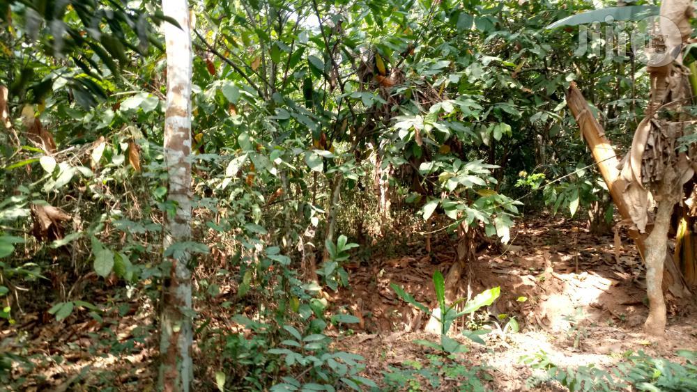 Archive: Farm Land At Obafemi Owode