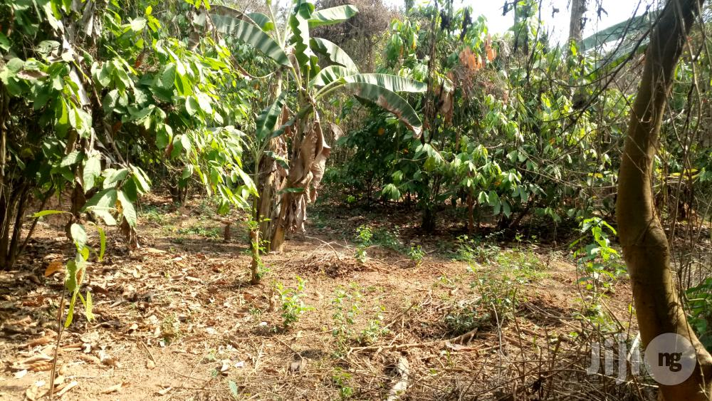 Farm Land At Lokolu