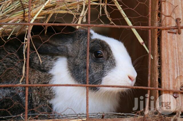 Rabbit Farming Training And Consultation