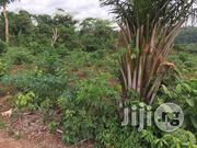 Cheap Farm Land In Arege Town Ogun State | Land & Plots For Sale for sale in Ogun State, Odeda
