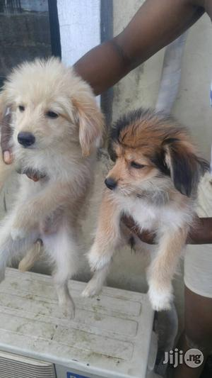 Baby Female Purebred | Dogs & Puppies for sale in Abuja (FCT) State, Dutse-Alhaji