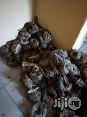 Aju Mbaise | Feeds, Supplements & Seeds for sale in Lagos State, Ikeja