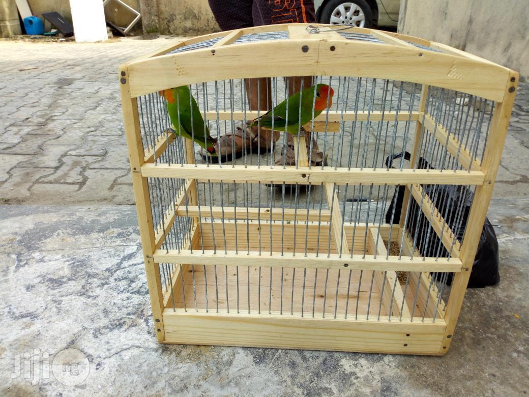 Pair Love Parrot For Sale