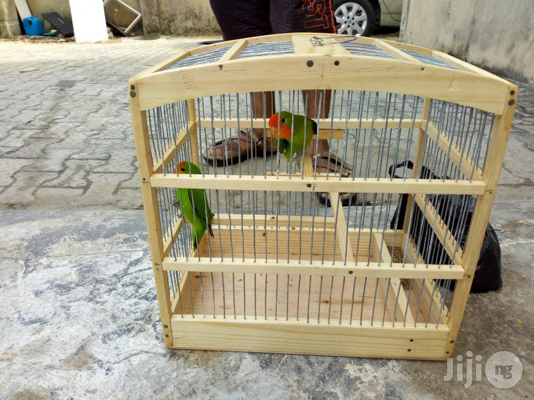 Pair Love Parrot For Sale | Birds for sale in Lagos State, Nigeria