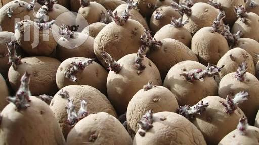 Potatoe Seeds Organic Seeds For Planting