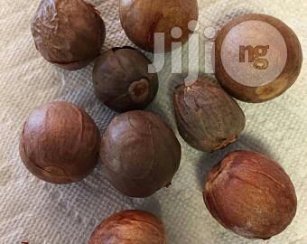 Avocado Seedlings For Planting