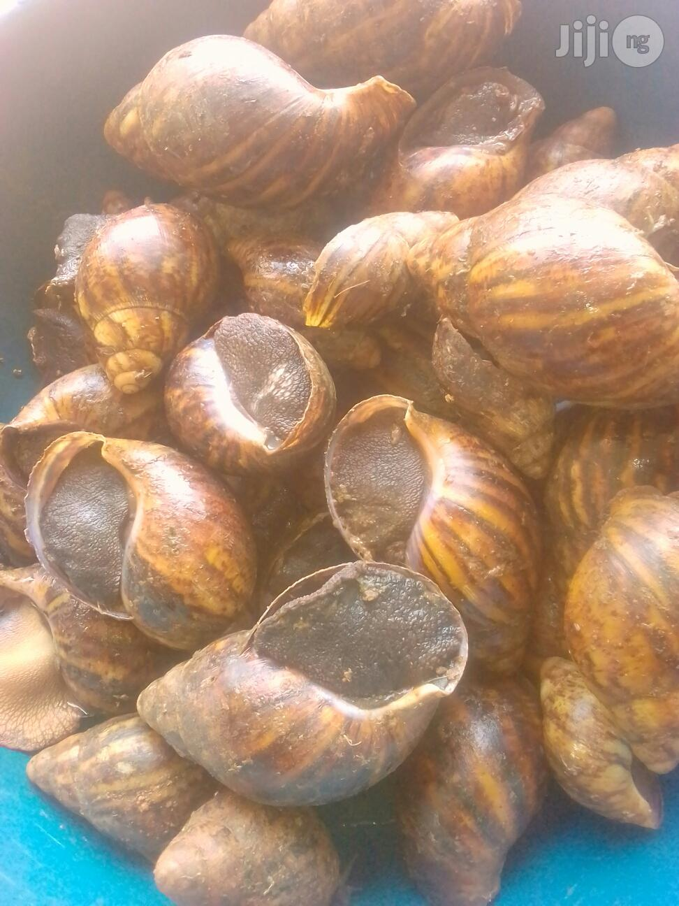 Big Snails Available For Sale | Other Animals for sale in Ibadan, Oyo State, Nigeria