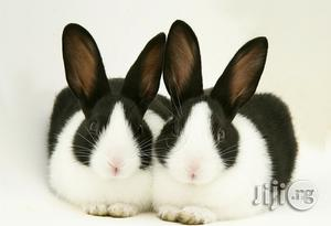 Rabbits Of Different Colors And Breeds | Livestock & Poultry for sale in Kaduna State, Kaduna / Kaduna State