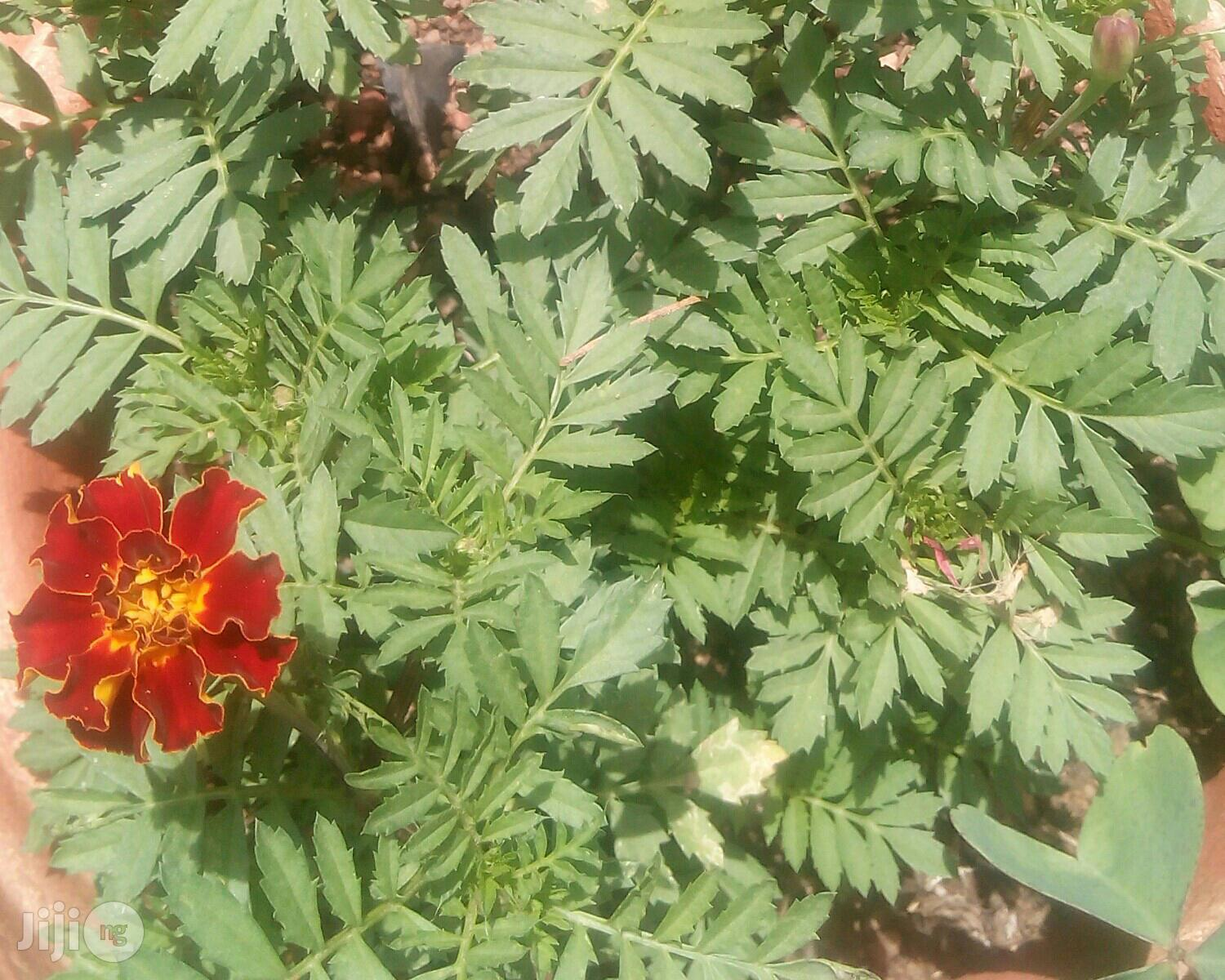 Seedlings Plants Seedlings Wholesale 10000 Pieces And Above | Garden for sale in Jos, Plateau State, Nigeria