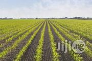 A Fertile Farmland For Sale At 70k In Ogbomoso | Land & Plots For Sale for sale in Oyo State, Ibadan