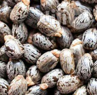 Castor Seeds Organic