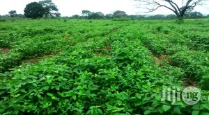 Improved Hybrid and OPV Soybean Seeds for Sale | Feeds, Supplements & Seeds for sale in Oyo State, Ibadan