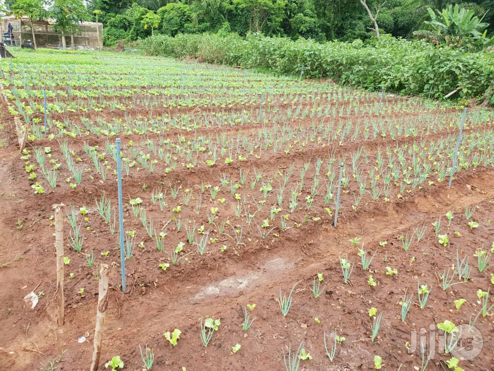Farmlands For Lease | Land & Plots for Rent for sale in Obafemi-Owode, Ogun State, Nigeria