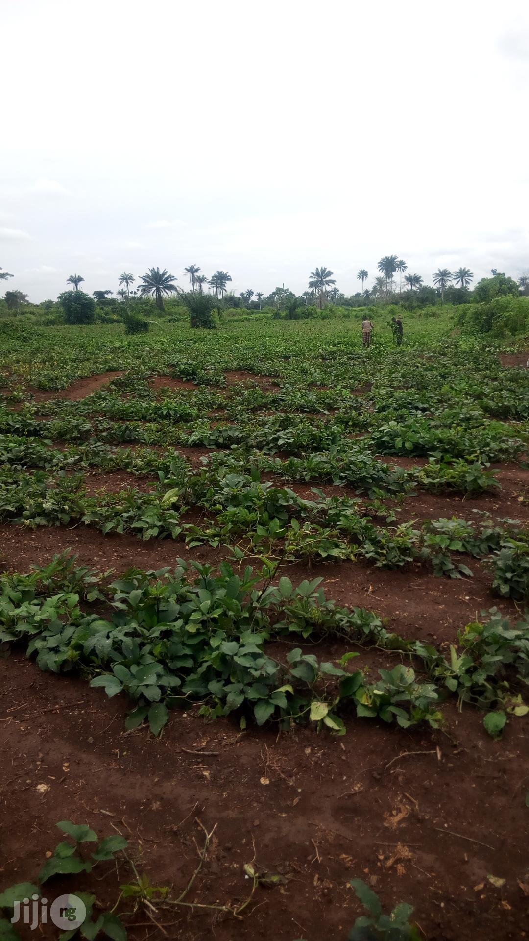 Archive: Farmland for Sale in Siun Abeokuta Road