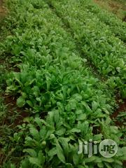 Farmland for Sale at Siun, Abeokuta Road | Land & Plots For Sale for sale in Ogun State, Obafemi-Owode