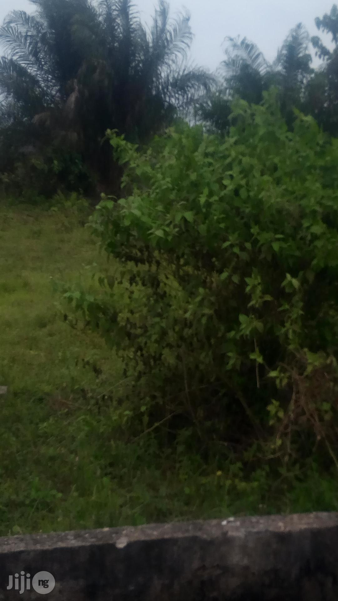 Archive: Farmland for Sale at Siun, Abeokuta Road