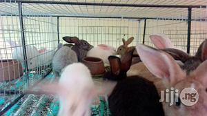 Quality Hyla Rabbits | Livestock & Poultry for sale in Oyo State, Akinyele