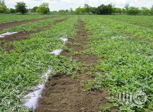 Epsom Salt For Plants , Garden Lawn   Garden for sale in Abuja (FCT) State, Kubwa