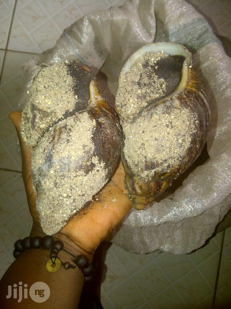 Snail Feed (Dkt Formula)   Feeds, Supplements & Seeds for sale in Nyanya, Abuja (FCT) State, Nigeria