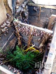 Set Up Your Personal Backyard Snail Farm Like This One | Building & Trades Services for sale in Enugu State, Igbo-Eze North