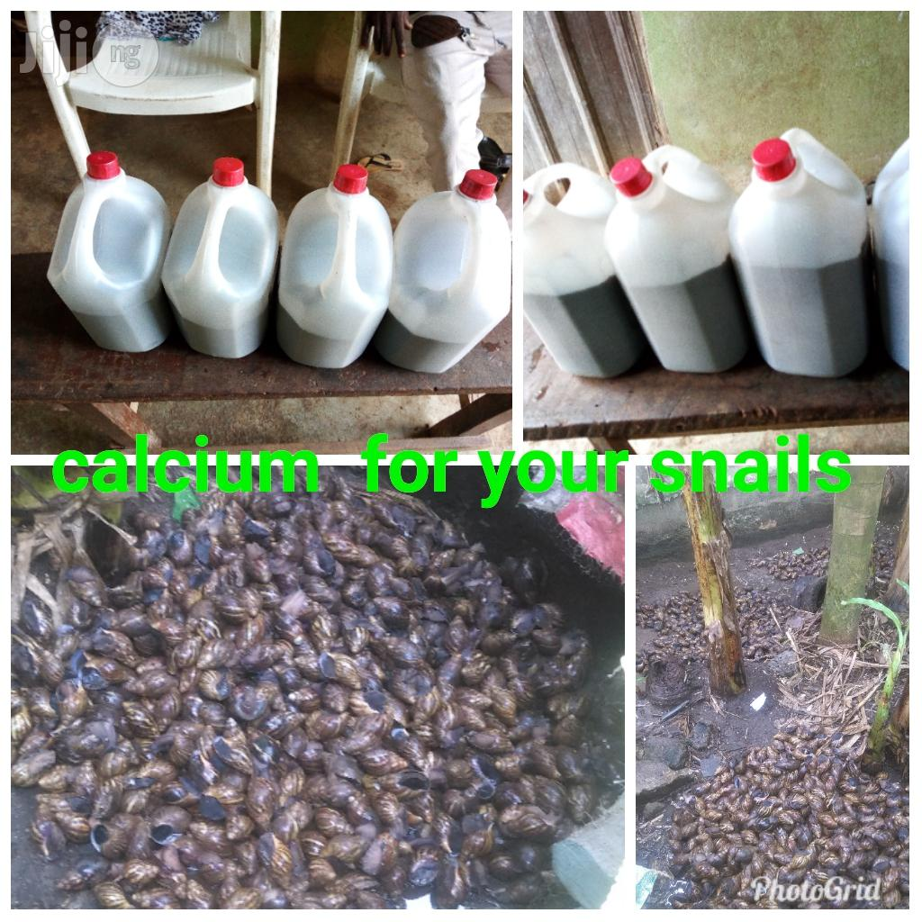 Calcium For Your Snails