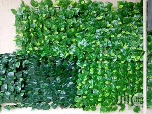 Wall Creeping Plant For Your Compound | Garden for sale in Lagos State, Ikeja