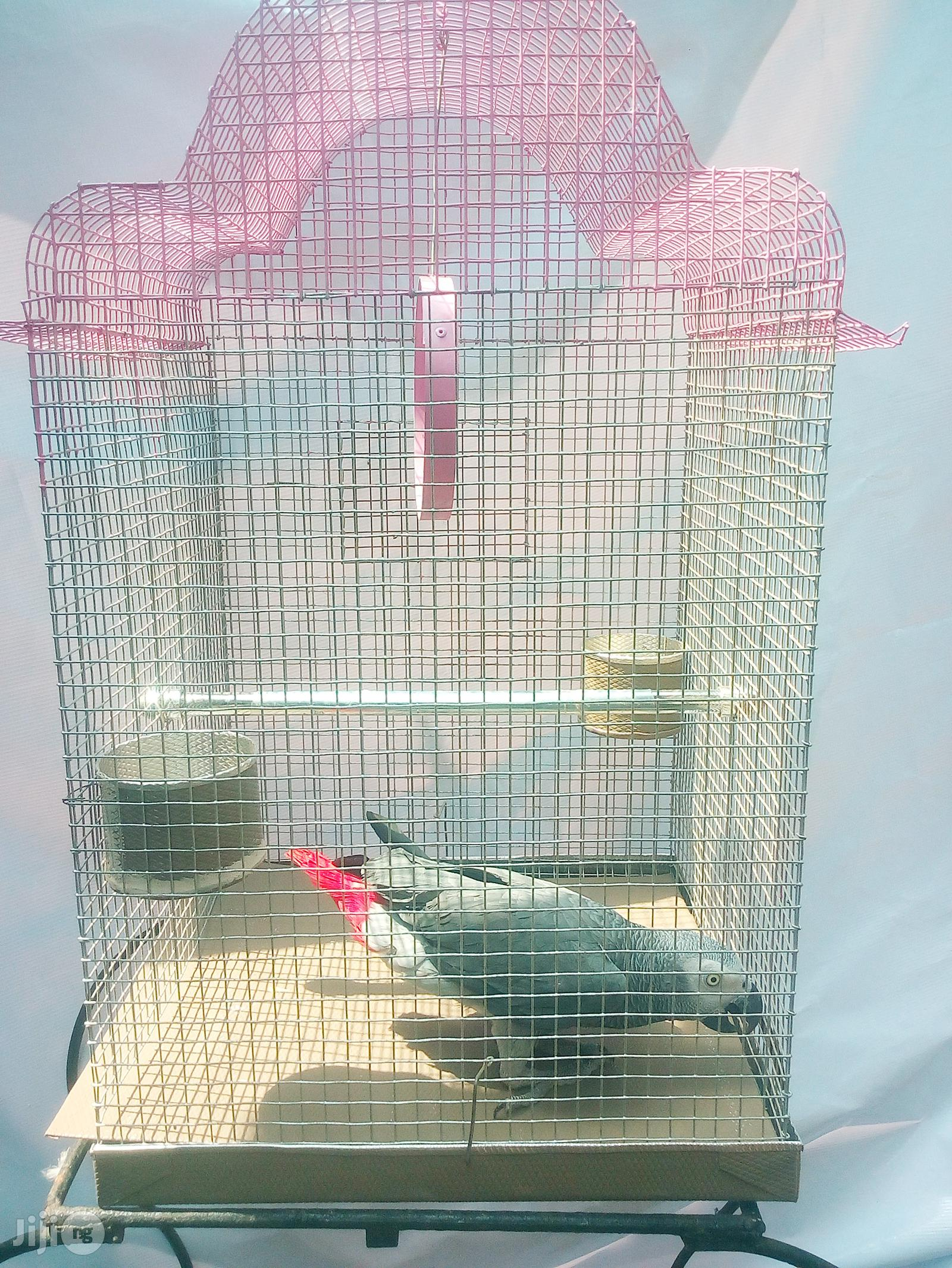 African Grey Parrot With Cage
