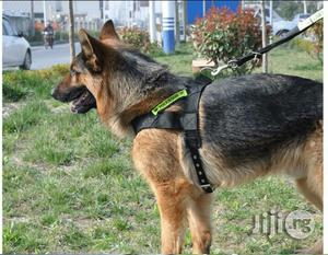 High Quality Dog Walk-Out Harness Vest Collar With Leash   Pet's Accessories for sale in Lagos State, Alimosho