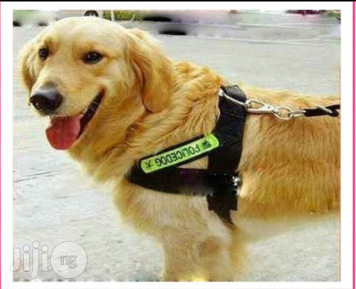 High Quality Dog Walk-Out Harness Vest Collar With Leash | Pet's Accessories for sale in Alimosho, Lagos State, Nigeria