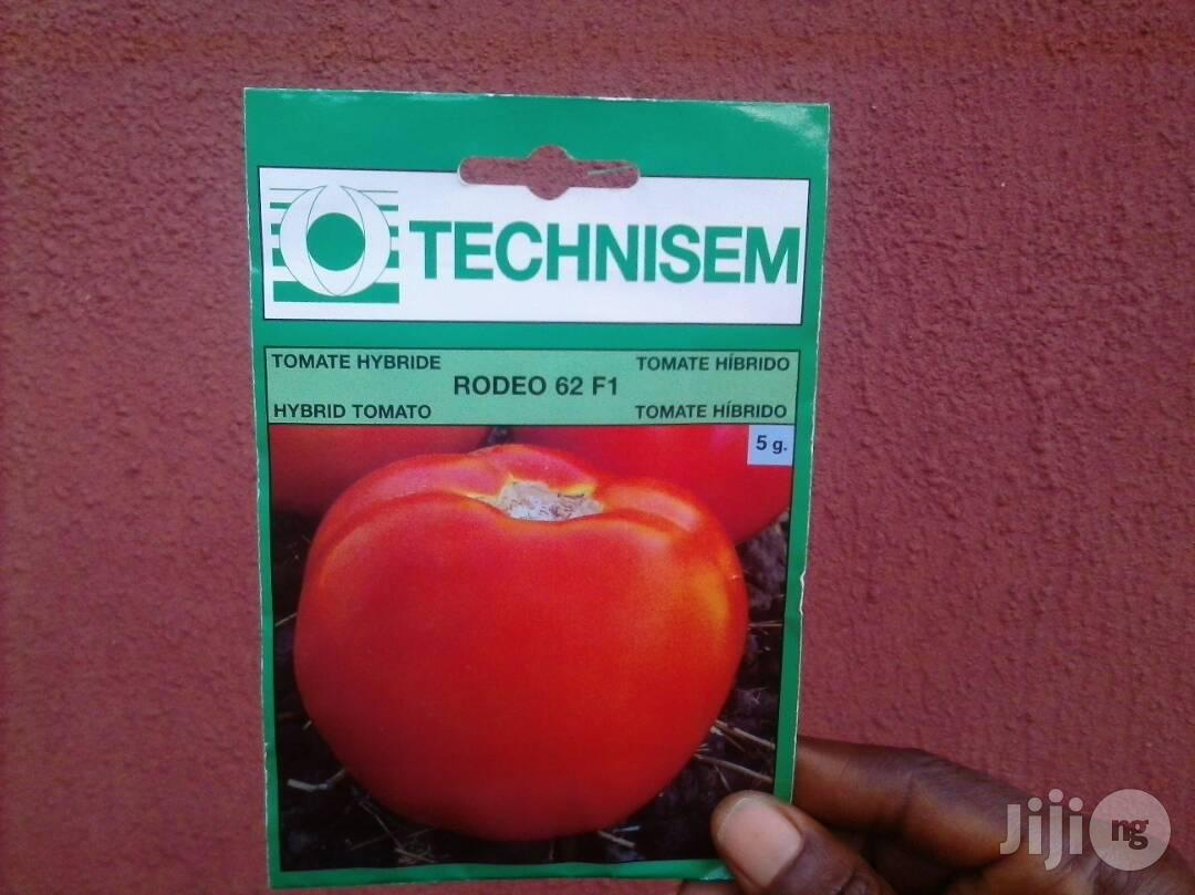 F1 Rodeo 62 Hybrid Tomato (Beef Tomato) Seed For Sale | Feeds, Supplements & Seeds for sale in Uvwie, Delta State, Nigeria
