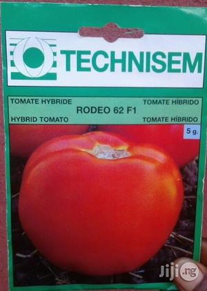 5g F1 Rodeo 62 Hybrid Tomato (Beef Tomato) Seed   Feeds, Supplements & Seeds for sale in Delta State, Uvwie
