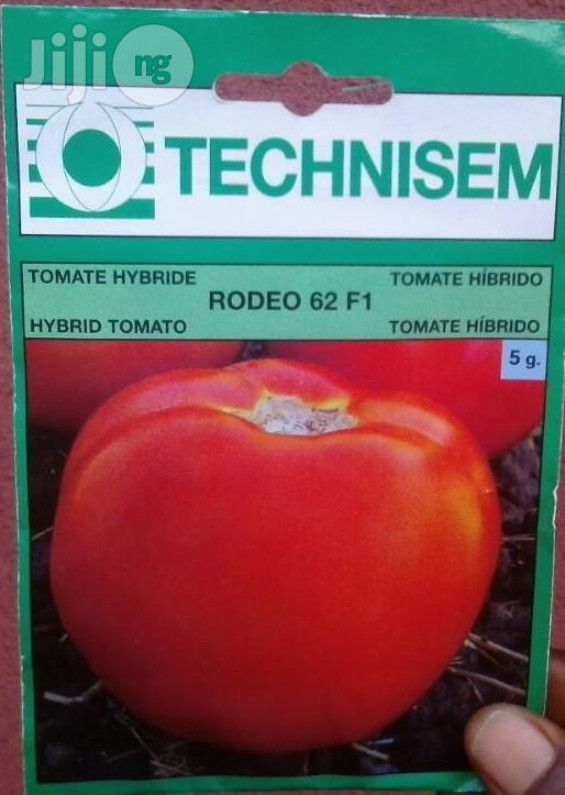 F1 Rodeo 62 Hybrid Tomato (Beef Tomato) Seed For Sale