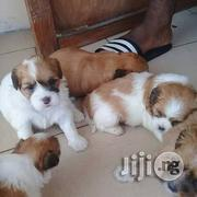 Cute Lhasa Apso Puppies For Sale   Dogs & Puppies for sale in Lagos State, Ikeja