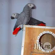 African Parrot | Birds for sale in Lagos State, Lekki Phase 1