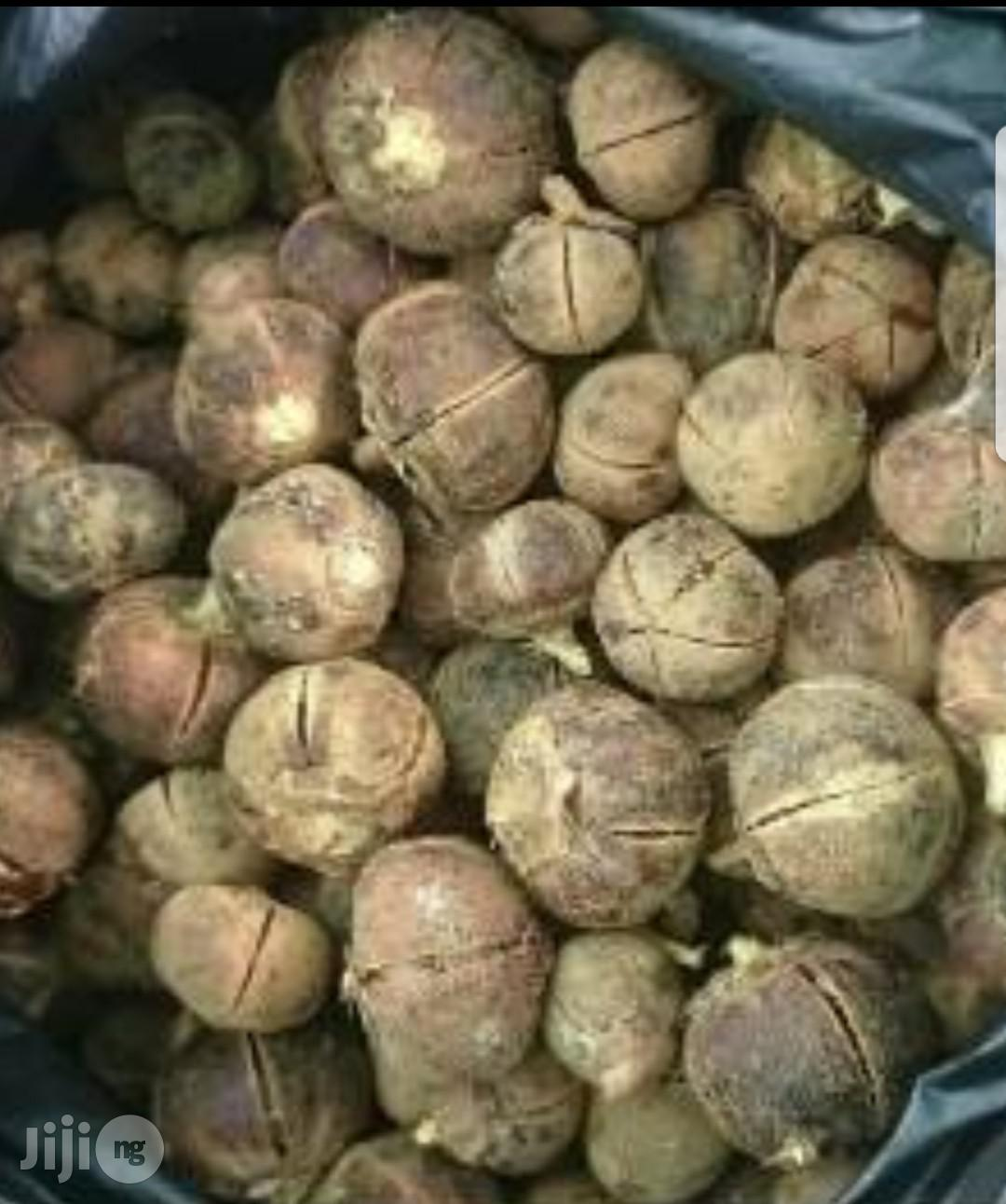 Archive: Gombe Goron Tula(African Silky Kola)