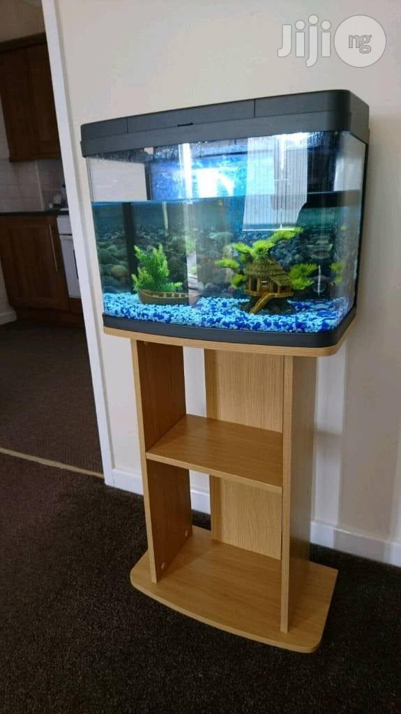 Aquariums And Water Bubbles