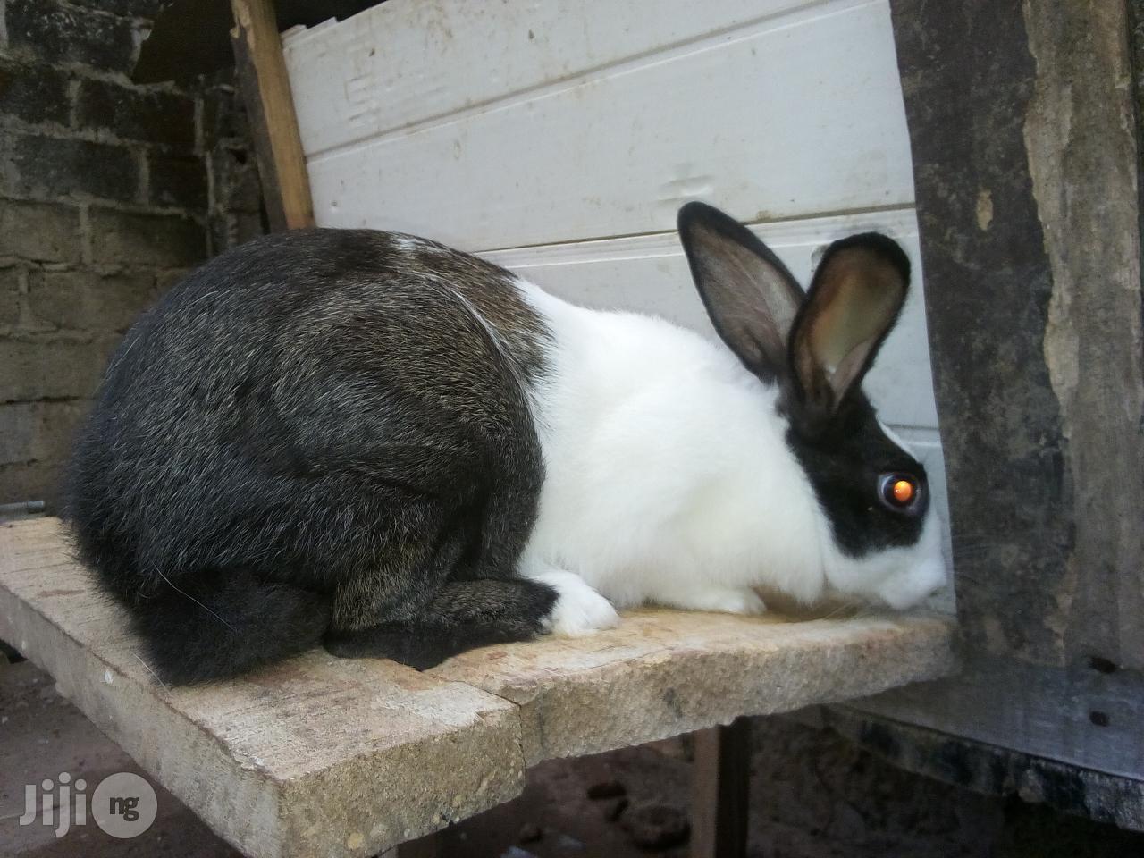 Archive: Emperor Rabbit Farm