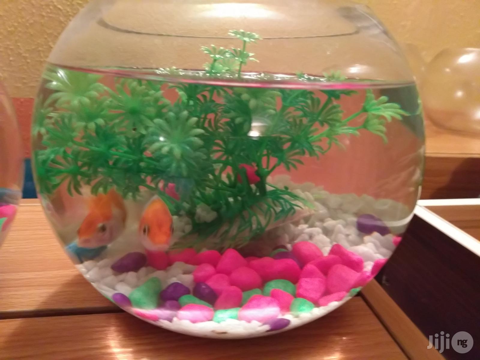 Fish Bowl Mini Aquarium