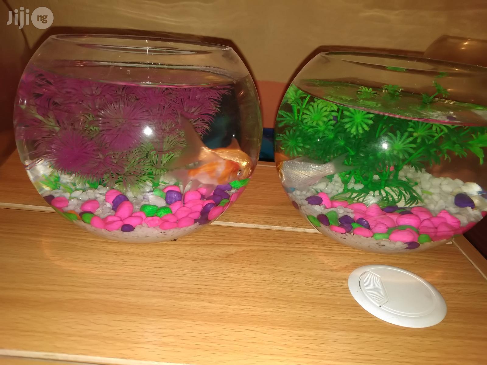 Fish Bowl Mini Aquarium | Fish for sale in Ikoyi, Lagos State, Nigeria